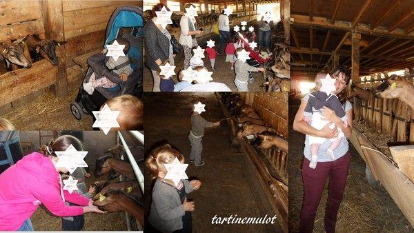 sortie à la chèvrerie avec les lapinous (1)